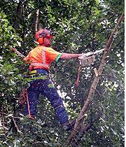 railside_tree_clearing